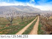 Купить «Apricot farm during sping season against Vayk mountain range, Vayots Dzor Province», фото № 29546253, снято 16 марта 2018 г. (c) Papoyan Irina / Фотобанк Лори