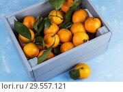 Купить «Fresh tangerines in box with leaves», фото № 29557121, снято 11 ноября 2018 г. (c) Jan Jack Russo Media / Фотобанк Лори
