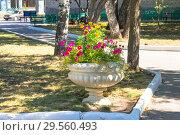 Элемент благоустройства городского парка. Вазон с цветами. Стоковое фото, фотограф Дудакова / Фотобанк Лори
