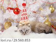 Купить «Cute little kitten in a Christmas cap», фото № 29560853, снято 8 декабря 2018 г. (c) Алексей Кузнецов / Фотобанк Лори