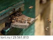 Купить «Honey bees flying about hive entrance», фото № 29561813, снято 9 июня 2018 г. (c) Короленко Елена / Фотобанк Лори