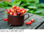 Red and yellow cherry in old mug, rustical still life. Стоковое фото, фотограф Короленко Елена / Фотобанк Лори