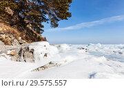 Купить «The shore of the frozen lake Baikal with a pine tree on the side of a hill on a sunny march day», фото № 29575557, снято 8 марта 2014 г. (c) Виктория Катьянова / Фотобанк Лори