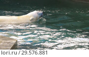 Купить «Polar bear playing in water», видеоролик № 29576881, снято 30 октября 2018 г. (c) Игорь Жоров / Фотобанк Лори