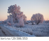 Купить «Beautiful winter landscape. Trees in the snow, snowdrifts.», фото № 29586553, снято 20 октября 2019 г. (c) Ирина Козорог / Фотобанк Лори