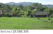 Купить «View from drone on rice terraces of mountain and house of farmers. Bali, Indonesia», видеоролик № 29588305, снято 10 декабря 2008 г. (c) Куликов Константин / Фотобанк Лори