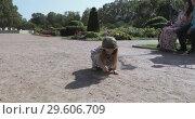 Купить «Girl draws in the sand», видеоролик № 29606709, снято 9 октября 2018 г. (c) Потийко Сергей / Фотобанк Лори