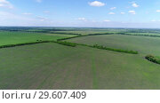 Купить «View of the field with crops in June in Russia», видеоролик № 29607409, снято 23 декабря 2018 г. (c) Володина Ольга / Фотобанк Лори