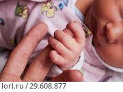 Купить «Новорожденный ребенок держится ладошкой за палец отца», фото № 29608877, снято 12 октября 2008 г. (c) Кекяляйнен Андрей / Фотобанк Лори