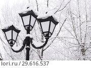 Купить «Winter snow cityscape. Vintage lantern in retro style on a background of snowy trees in cloudy weather», фото № 29616537, снято 23 декабря 2018 г. (c) Светлана Евграфова / Фотобанк Лори