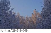 Купить «Tree tops covered with frost low angle view», видеоролик № 29619049, снято 22 декабря 2018 г. (c) Гурьянов Андрей / Фотобанк Лори