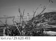 Купить «Мыс Слепиковского, остров Сахалин», фото № 29620493, снято 2 декабря 2018 г. (c) Поволкович Федор / Фотобанк Лори