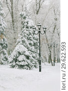 Купить «Weather, cold, winter in the city. Tree branches covered with fresh white snow and hoarfrost after snowfall in the park on the alley with lanterns», фото № 29622593, снято 23 декабря 2018 г. (c) Светлана Евграфова / Фотобанк Лори