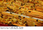 Bees are sitting on the comb in the hive. Стоковое фото, фотограф Володина Ольга / Фотобанк Лори
