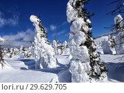 Купить «Winter forest against mountains. Winter wonderland with trees of unusual shape», фото № 29629705, снято 14 марта 2015 г. (c) Евгений Ткачёв / Фотобанк Лори