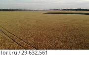 Купить «Species in the air of field with ripe rye in Russia,», видеоролик № 29632561, снято 17 июня 2019 г. (c) Володина Ольга / Фотобанк Лори