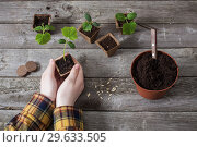 Купить «hand and cucumber seedlings on a wooden table», фото № 29633505, снято 17 марта 2018 г. (c) Майя Крученкова / Фотобанк Лори