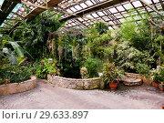 Купить «Botanical Garden of Vladivostok, interior of greenhouse with plants», фото № 29633897, снято 27 июля 2018 г. (c) Катерина Белякина / Фотобанк Лори