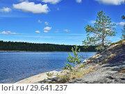 Купить «Karelian landscape - rocks, pine trees and water. Bay Chupa, White Sea, Karelia, Russia», фото № 29641237, снято 10 августа 2018 г. (c) Сергей Трофименко / Фотобанк Лори