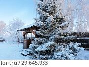 Купить «Беседка у пихты зимой», эксклюзивное фото № 29645933, снято 16 декабря 2018 г. (c) Анатолий Матвейчук / Фотобанк Лори