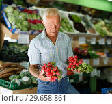 Older man choosing fresh vegetables. Стоковое фото, фотограф Яков Филимонов / Фотобанк Лори