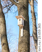 Купить «Wooden birdhouse on a high tree in the winter park», фото № 29659365, снято 23 февраля 2018 г. (c) FotograFF / Фотобанк Лори