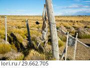 Купить «Views of steppe landscape of Pampas, Argentina», фото № 29662705, снято 30 января 2017 г. (c) Яков Филимонов / Фотобанк Лори