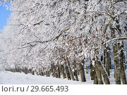 Купить «Winter forest on sunny day», фото № 29665493, снято 7 января 2019 г. (c) Знаменский Олег / Фотобанк Лори