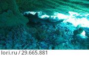 Купить «A Shark Swimming», видеоролик № 29665881, снято 20 апреля 2019 г. (c) Wavebreak Media / Фотобанк Лори