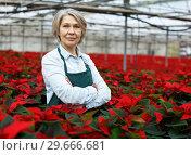 Купить «Proud woman florist in glasshouse», фото № 29666681, снято 22 ноября 2018 г. (c) Яков Филимонов / Фотобанк Лори