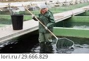 Купить «Female standing in fish tank fishing for sturgeon with landing net», фото № 29666829, снято 4 февраля 2018 г. (c) Яков Филимонов / Фотобанк Лори