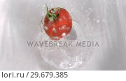 Купить «Tomato falling into water in super slow motion», видеоролик № 29679385, снято 26 января 2012 г. (c) Wavebreak Media / Фотобанк Лори