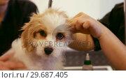 Купить «Groomer examining the dog», видеоролик № 29687405, снято 19 января 2016 г. (c) Wavebreak Media / Фотобанк Лори