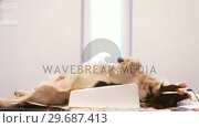 Купить «Dog lying on an operation table », видеоролик № 29687413, снято 19 января 2016 г. (c) Wavebreak Media / Фотобанк Лори