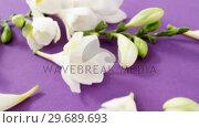 Купить «White flowers decorated», видеоролик № 29689693, снято 24 августа 2016 г. (c) Wavebreak Media / Фотобанк Лори