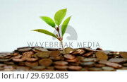 Купить «Close-up of plant grows from stack of coins», видеоролик № 29692085, снято 12 августа 2016 г. (c) Wavebreak Media / Фотобанк Лори