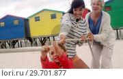 Купить «Multi generation family playing tug of war at beach», видеоролик № 29701877, снято 1 марта 2017 г. (c) Wavebreak Media / Фотобанк Лори