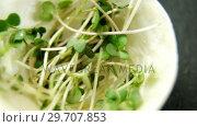 Fenugreek leaves in bowl 4k. Стоковое видео, агентство Wavebreak Media / Фотобанк Лори