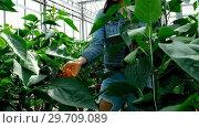 Купить «Woman checking eggplant while using digital tablet 4k», видеоролик № 29709089, снято 11 апреля 2017 г. (c) Wavebreak Media / Фотобанк Лори