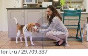Купить «Happy woman feeding food to her dog while stroking 4K 4k», видеоролик № 29709337, снято 31 мая 2017 г. (c) Wavebreak Media / Фотобанк Лори