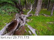 Купить «Forest views», фото № 29711173, снято 1 февраля 2017 г. (c) Яков Филимонов / Фотобанк Лори