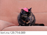 Купить «Home cat and pink mouse play», фото № 29714089, снято 19 ноября 2011 г. (c) Яна Королёва / Фотобанк Лори