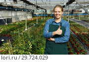 Купить «Young female gardener in apron standing near seedlings of oregano in pots in greenhouse», фото № 29724029, снято 3 октября 2018 г. (c) Яков Филимонов / Фотобанк Лори