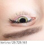 Купить «Female eye zone and brows with day makeup», фото № 29729161, снято 22 марта 2018 г. (c) Serg Zastavkin / Фотобанк Лори