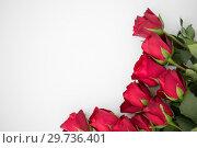 Купить «close up of red roses on white background», фото № 29736401, снято 8 февраля 2018 г. (c) Syda Productions / Фотобанк Лори