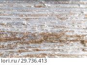 Купить «tree bark or wooden surface background», фото № 29736413, снято 22 февраля 2018 г. (c) Syda Productions / Фотобанк Лори