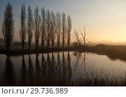 Купить «Row of trees near Uppel», фото № 29736989, снято 6 апреля 2007 г. (c) John Stuij / Фотобанк Лори