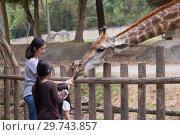 Купить «Женщина с двумя девочками кормит жирафа. Зоопарк Чианг Мая, Таиланд», фото № 29743857, снято 20 декабря 2018 г. (c) Виктор Карасев / Фотобанк Лори
