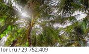 Купить «Bottom view of palm tree», видеоролик № 29752409, снято 19 января 2019 г. (c) Ekaterina Demidova / Фотобанк Лори