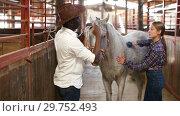 Купить «Positive Caucasian girl and afro man using electric trimmer for shearing gray horse in stable», видеоролик № 29752493, снято 13 ноября 2018 г. (c) Яков Филимонов / Фотобанк Лори